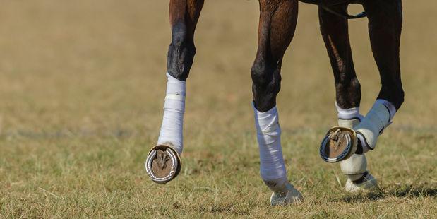 Harlow Gold has threatened to win a big race this season. Photo / 123RF