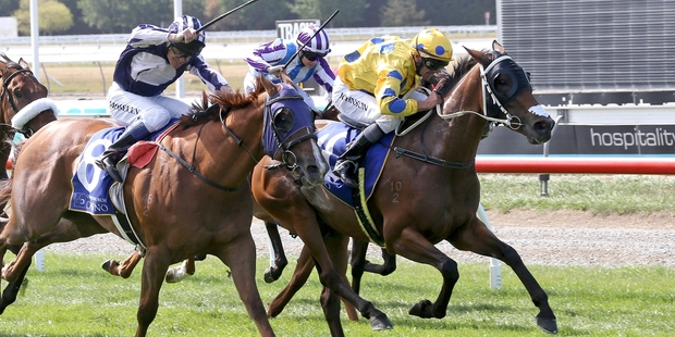 Fairlight runs in the Riccarton feature today. Photo / Race Images