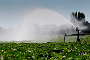 New Zealand farms use about 600,000 times more water than is bottled and sent overseas. Photo / Warren Buckland