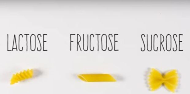 Some examples of sugars in carbs are lactose, fructose and sucrose (represented by different types of pasta). Photo /  YouTube, BrainCraft