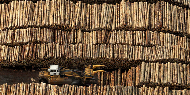 The average price for roundwood logs used in the horticulture sector rose to $92 a tonne in March. Photo / Alan Gibson