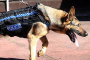 In the last six months of 2016, almost 30 youths had police dogs released on them. More than 60 percent of those youths were Maori.