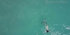 Watch: Watch: Shark gets too close