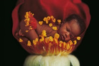 Anne Geddes, Small World  inside page published by Taschen Books. Photo / Anne Geddes