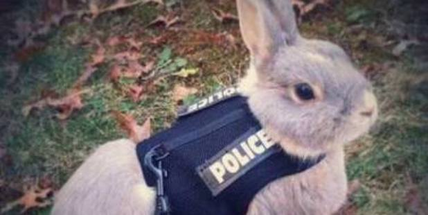 Loading Bunnies have joined the NZ police force according to Waikato District Police. Photo / Waikato District Police Facebook