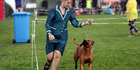 View: Dog Show at HB Racecourse, Hastings