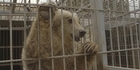 Watch: Watch NZH Focus: Daring animal rescue from Mosul Zoo