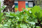 Gardens are a feature at New Lynn's Fruitvale School. Photo / Fruitvale School website