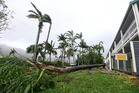 A palm tree is fallen behind a motel at Airlie Beach. Photo / AAP