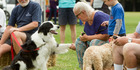 View: Doggy Day Out a great success