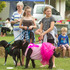 Doggy Day Out in Katikati. Zara Walton, 13, (left) with Sox and Samantha Besley, 13, with Casper. 25 March 2017. Photo/Ben Fraser