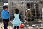 Starving bear Lula is seen in its cage at ruined Muntazr al-Nour zoo in Mosul, Iraq on February 9, 2017. The animal park has been destroyed. Photo / Getty Images