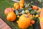 Southwell's pumpkin and squash crop. Photo / Supplied