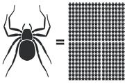 The world's spider population weighs 29 million tons - as much as 478 Titanics. Photo / The Washington Post