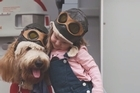 Virgin Australia announce in-flight doggie dollies