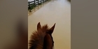 Watch: Watch: Ramarama resident takes to horseback to show extent of flooding