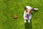Even the most angelic dog will poop randomly. Photo / 123RF