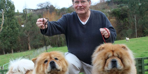 Tim Delaney, whose kennel club is organising the show, is one of only three chow breeders in the country.
