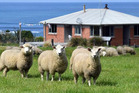 Overseas visitors are flocking to this rental cottage nestled between the farm and the sea. Photo / Stephen Jaquiery