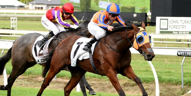 Melody Belle takes out the $225,000 Manawatu Sires Produce Stakes at Awapuni on Saturday. Photo / Racing Desk