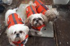 Oscar, Muppet and Oblio live on a yacht, so it's safety first during the storm. Photo / Twitter: @quillfeather.