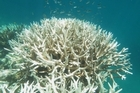 Warm ocean temperatures are contributing to coral bleaching and global warming will make things worse