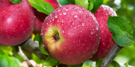 The skin of the apple contains the most quercetin so don't peel them. Photo / Getty Images