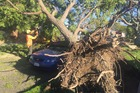 DAMAGE: About ten trees came down in McDonald Street, Napier last night with two cars damaged and plenty of cleanup work to be done. PHOTO/PAUL TAYLOR.