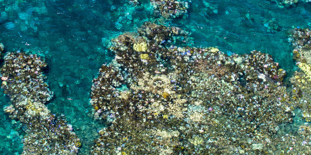Bleaching of coral on the Great Barrier Reef as seen in an aerial survey. Picture / Ed Roberts