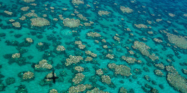 Loading Bleaching of coral on the Great Barrier Reef as seen in an aerial survey. Picture / Ed Roberts