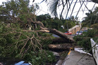 A tree blocks the road in Noumea after tropical cyclone Cook passed through New Caledonia. Picture / Supplied