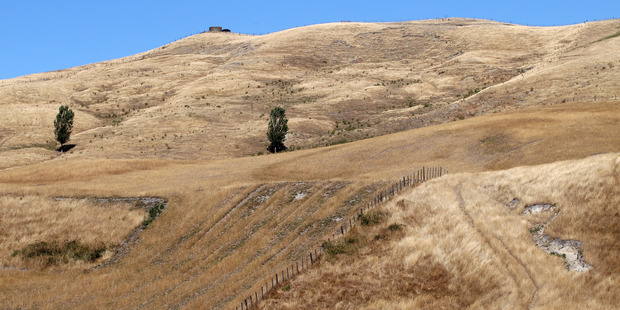 Droughts have also been a problem in New Zealand in recent years. Photo / Duncan Brown