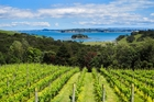 Waiheke is about sun and grapes and vineyards and views and peace ... it is a jewel. Photo / Supplied