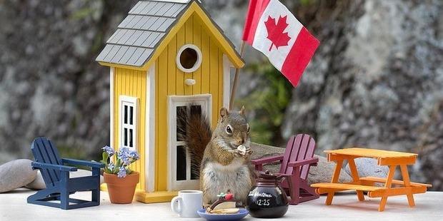 A squirrel enjoying one of Nancy's creations. Photo / Nancy Rose
