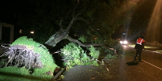 A tree down in Nuffield Ave in Napier. Photo / Paul Taylor