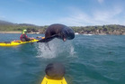 The giddy playmate posed for a photo while leaping over the front of the kayak off Stewart Island. Photo / Caters News Agency