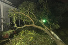 Strong winds knock down a tree in Hastings. Photo / Supplied