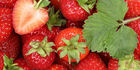 Studies showed that strawberry extract blocked biological processes involved in tumour growth and spread. Photo / 123RF
