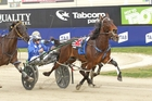 Waikiki Beach will add some class to the Taylor Mile field. Photo / Harness Racing Victoria