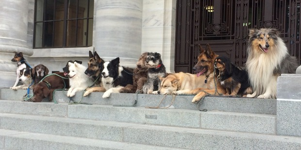 Dogs on Parliament's front steps today.