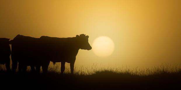 The wet weather has had an impact on milk production in Taranaki.