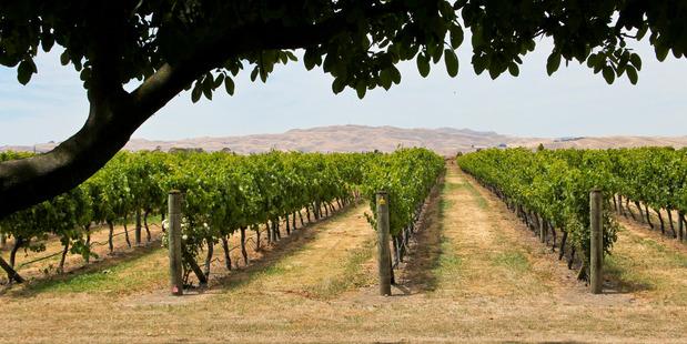 Ngatarawa Winery in Hawkes Bay. Photo /Warren Buckland