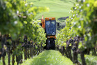NZ wine exports to US are soaring