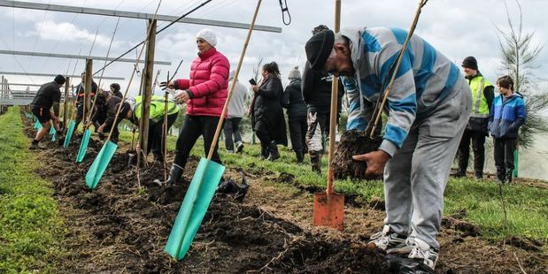 Residents from Matakana Island during a planting ceremony last year. The island has been named as one of 10 areas where new orchards will be planted in a major kiwifruit project. Photo/supplied