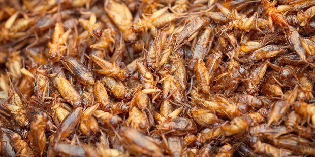 Fancy some crickets fried in oil? Photo / 123rf