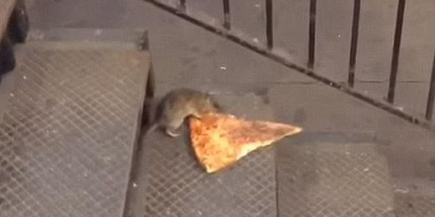 "There have been a number of food-related incidents involving rats on the subway in recent years - most famously, the ""Pizza Rat"" of 2015. Photo/YouTube"