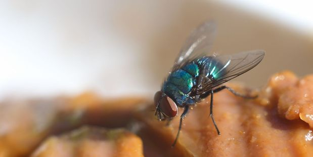 This fly is probably spewing on this food right now. Photo / 123RF