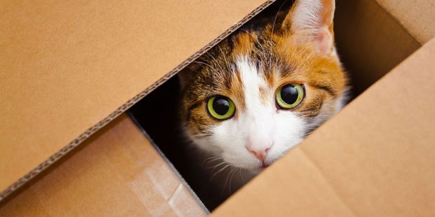 Loading Boxes and other small spaces give a cat a sense on security open space just can't provide. Photo / 123RF