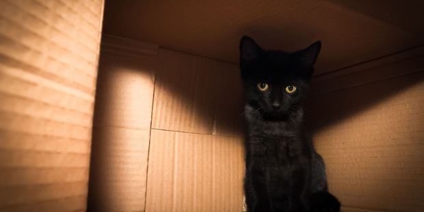 A Dutch study concluded that cats with boxes were less stressed because they had a cardboard hidy-hole to hunker down in. Photo / 123RF