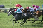 Thee Auld Floozie (grey) will give Stephen Marsh a strong hand in the group two Travis Stakes. Photo / Trish Dunell